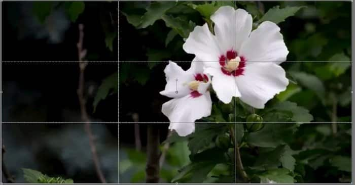 rule of thirds example 5