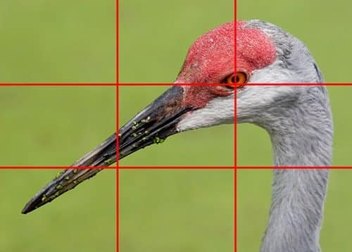 rule of thirds example 7